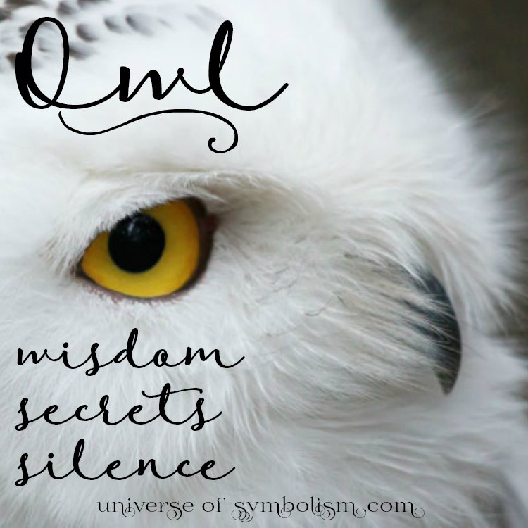 Owl Symbolism Meaning - Spirit, Power  Totem Animal Healing & Medicine