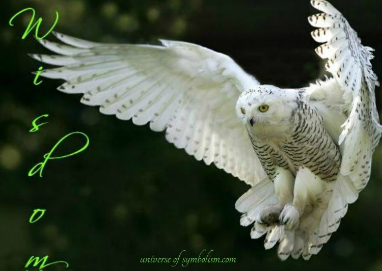 Owl Symbolism & Meaning - Owl as Spirit, Totem & Power Animal, Owl Dream Meaning