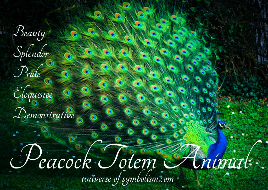 Peacock Totem Animal ~ The Peacock represents the symbolsim of splendor, pride, eloquence to name but a few. . .