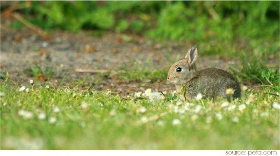 Rabbit Symbolism & Meaning