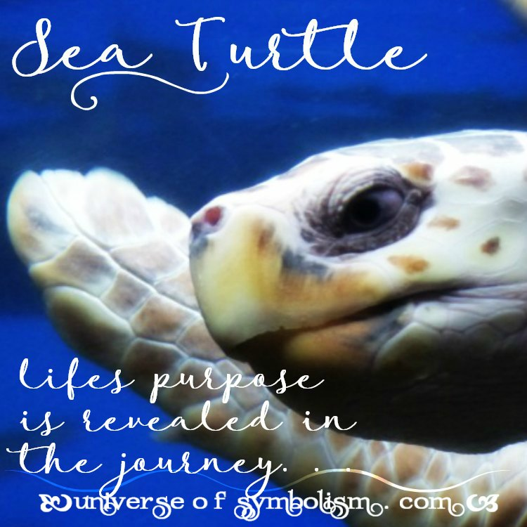 Sea Turtle Symbolism Meaning Spirit Totem Animal Guidance Healing