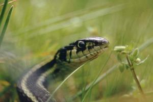 snake totem medicine