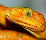 snake symbols