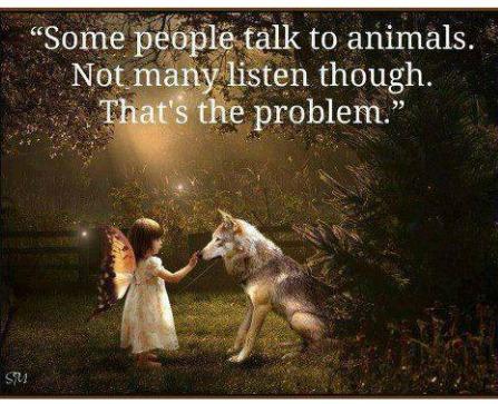 spiritual meaning of  animals