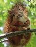 squirrel totem