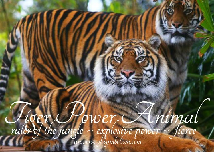Tiger Power Animal Symbolism and Meaning