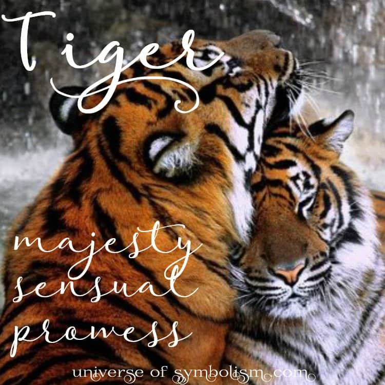 Tiger Spirit, Totem & Power Animal | Symbolism and Meaning