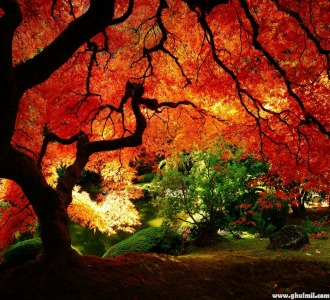 tree symbolism - autumn brings new meanings from the mystery of trees