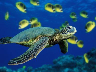 Turtle Symbolism Meaning Turtle Spirit Totem Animal Guidance