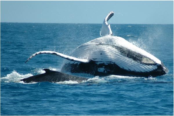 humpback whale symbols