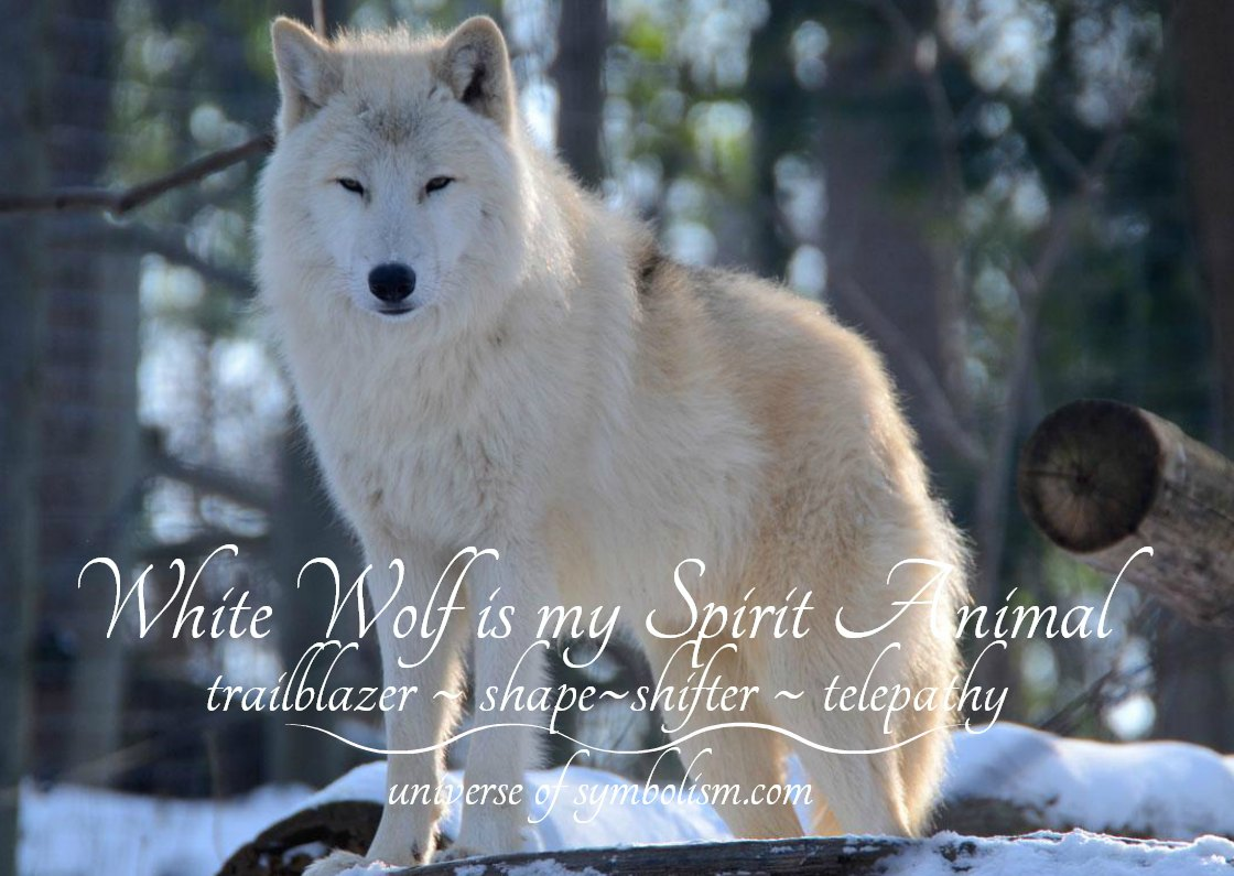 White wolf is my Spirit Animal
