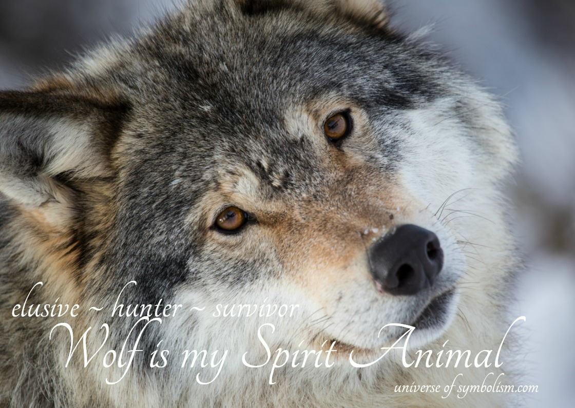 Wolf Spirit, Totem, Power Animal | Symbolism & Meaning Wolf is the symbol of shapes~shifting and finding secret paths