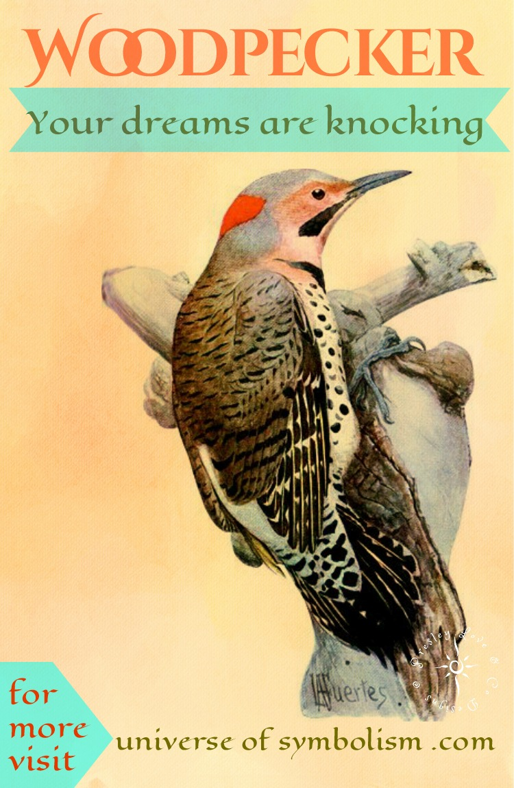 Woodpecker Spirit animal proclaims your dreams are knocking, are you ready to answer the call?