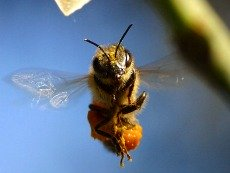 Bee - go after your field of dreams
