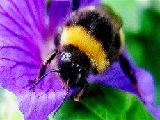 Bee - Symbol of Love