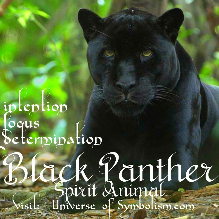 Black Panther Symbolism - intention, confidence, focus, determination, hunter