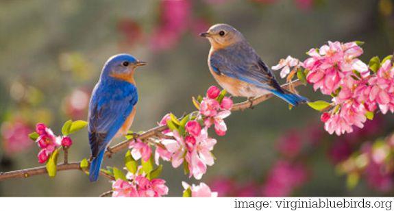 Bluebird Symbolism