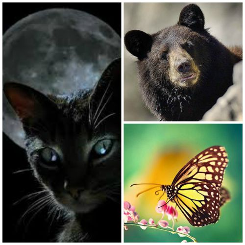 chakra animals