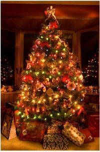 christmas tree - christmas symbol