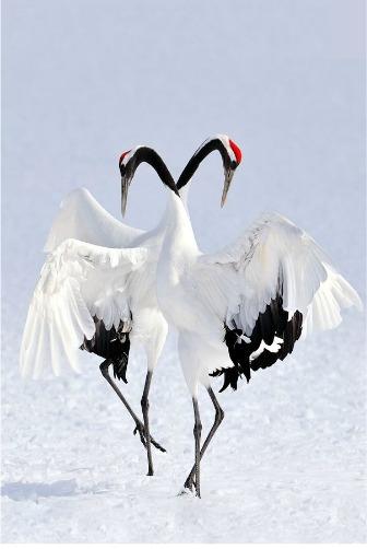 Crane Symbolism