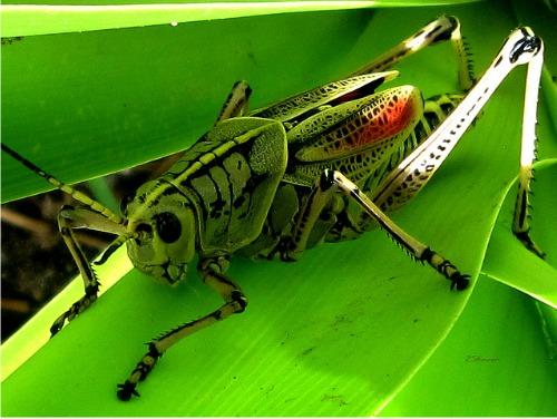 Cricket Symbolism & Meaning | Cricket Spirit Animal
