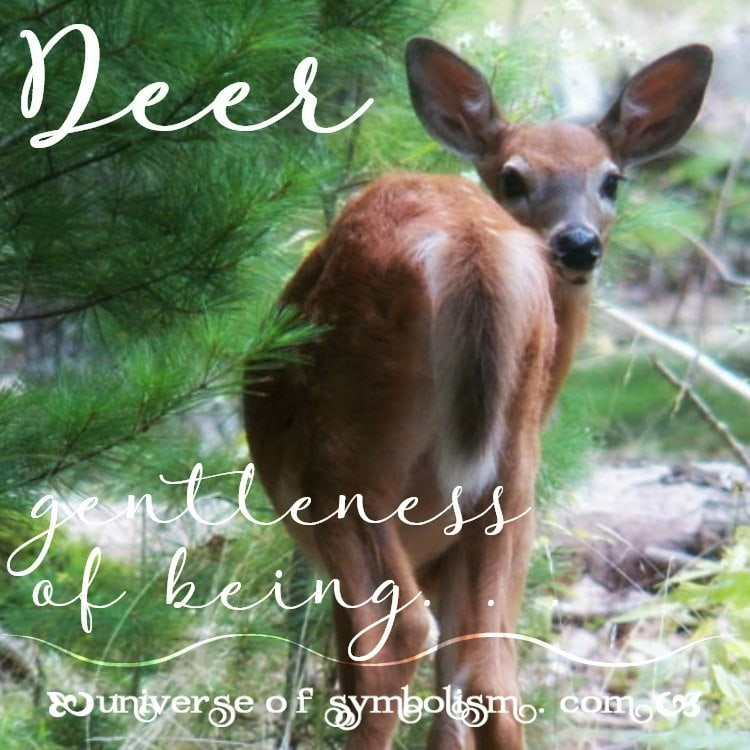 Deer Symbolism | Deer Meaning | Deer Totem Power & Spirit Animal