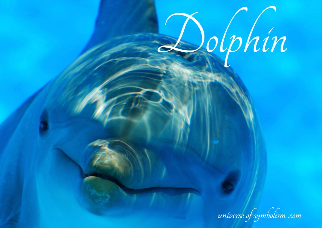Dolphin Symbolism & Meaning - Dolphin Spirit, Totem, Power Animal, Dream Meaning of Dolphin