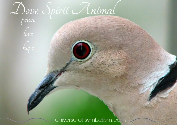 Dove Spirit Totem Power Animal Meaning & Symbolism | Dove is a global symbol of peace, harmony, love and hope.