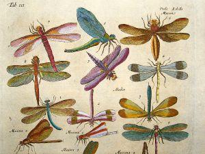 Vintage Dragonfly Tattoo Art