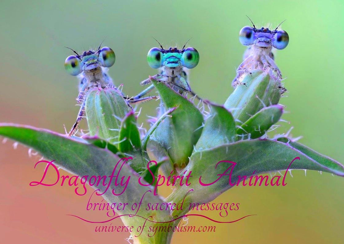 Dragonfly Symbolism & Meaning   Spirit, Power & Totem Animal