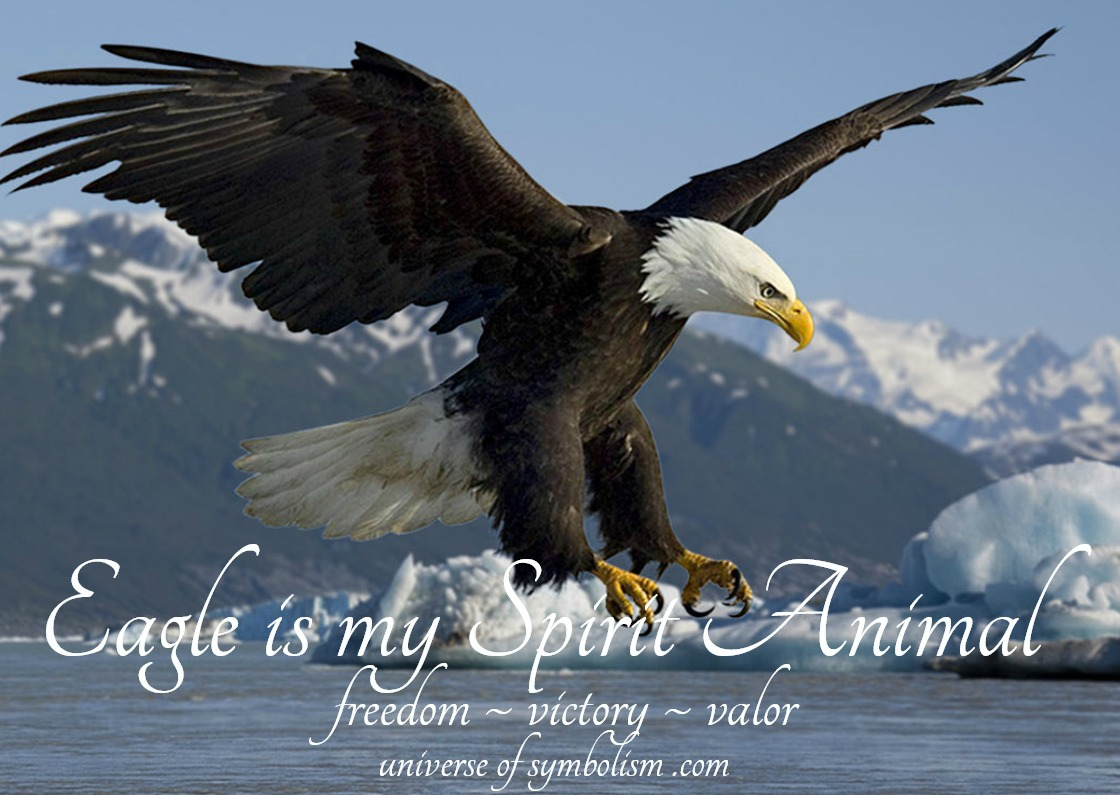 Eagle symbolism and meaning | Eagle Spirit, Power & Totem Animal