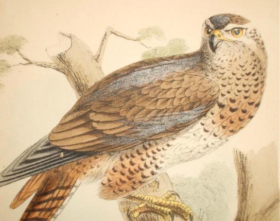 Exceptional Vintage Falcon Tat Idea