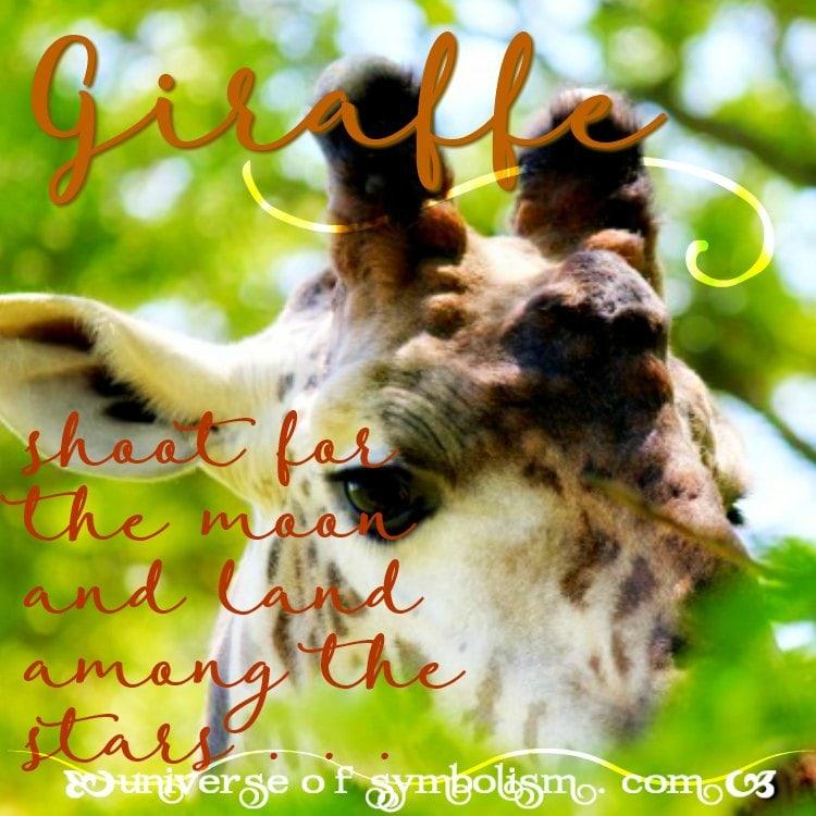 Giraffe Symbolism Meaning Giraffe Spirit Totem Animal Powers