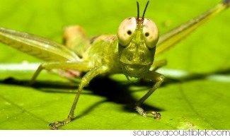 grasshopper symbolism - grasshopper in repose