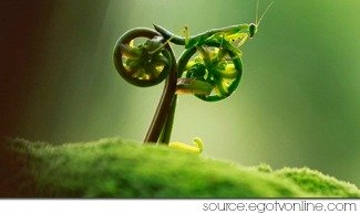 grasshopper spirit animal - on a motor bike