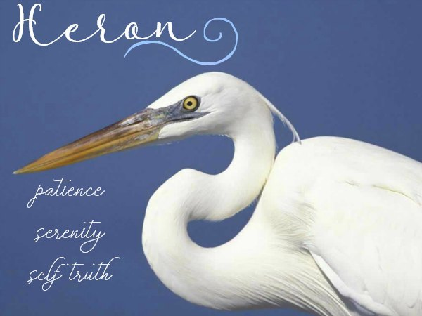 Heron Symbolism & Meaning - Spiritual significance of Heron, Heron as Spirit, Totem & Power Animal - Dream Meanings of Heron