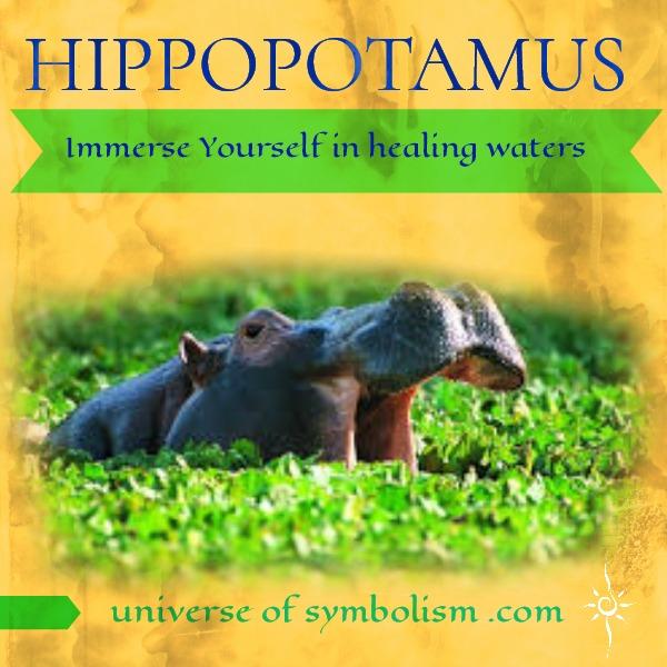 Hippopotamus Spirit Animal & Symbolism