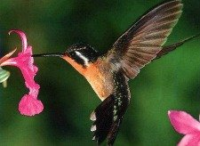 Hummingbird teaches the meaning of spiritual journeys