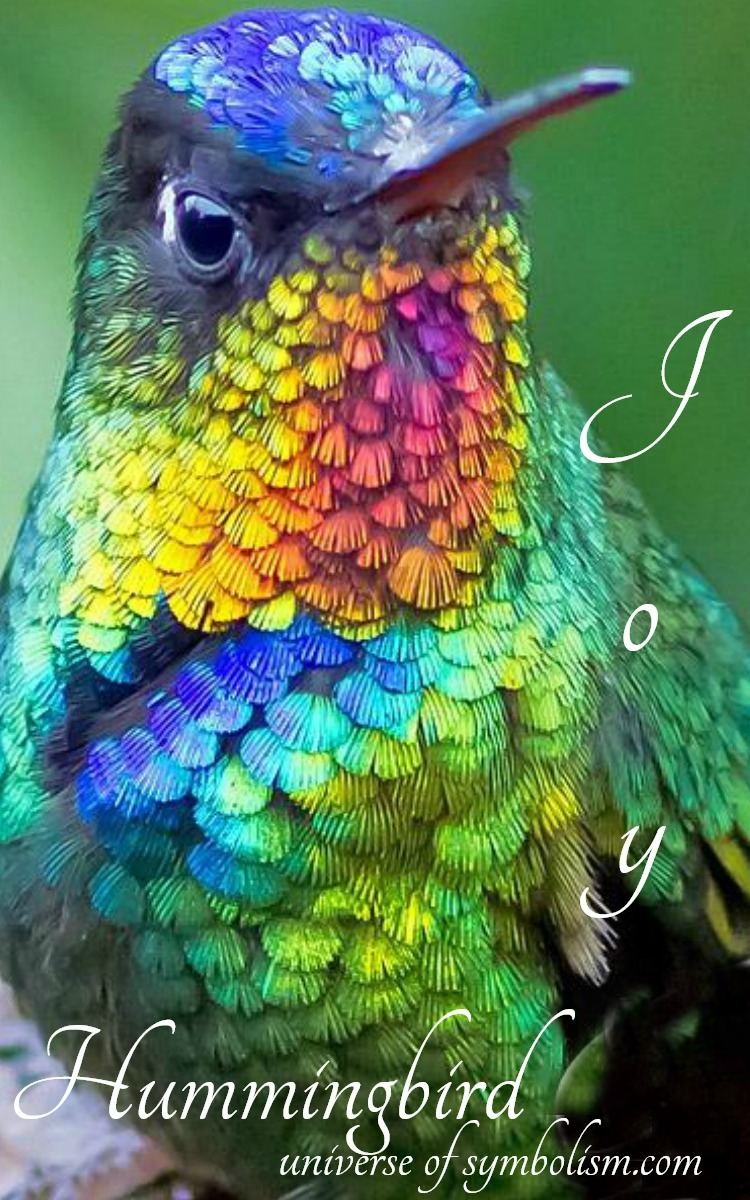 Hummingbird Meaning & Symbolism | Spirit Totem & Power Animal