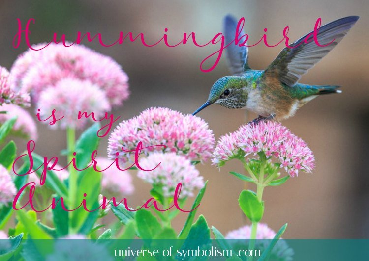 Hummingbird Spirit Animal Symbolism & Meaning