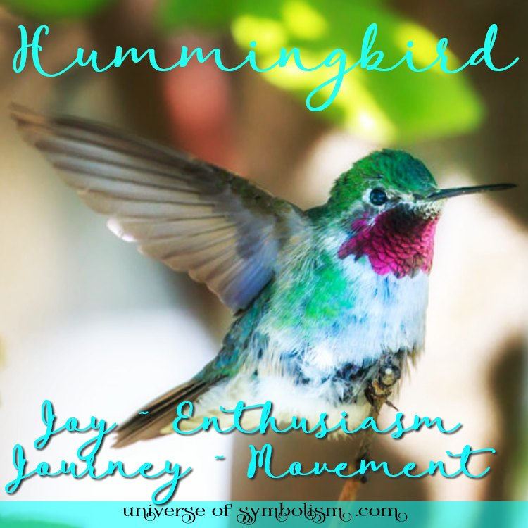 Hummingbird Spirit, Totem, Power & Animal Symbolism and Meaning