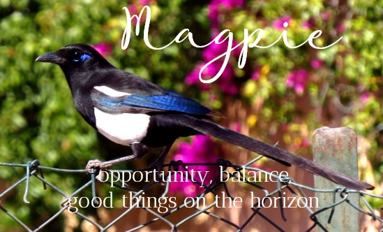 Magpie Symbolism & Meaning, Magpie Spirit, Totem & Power Animal Messages & Medicine