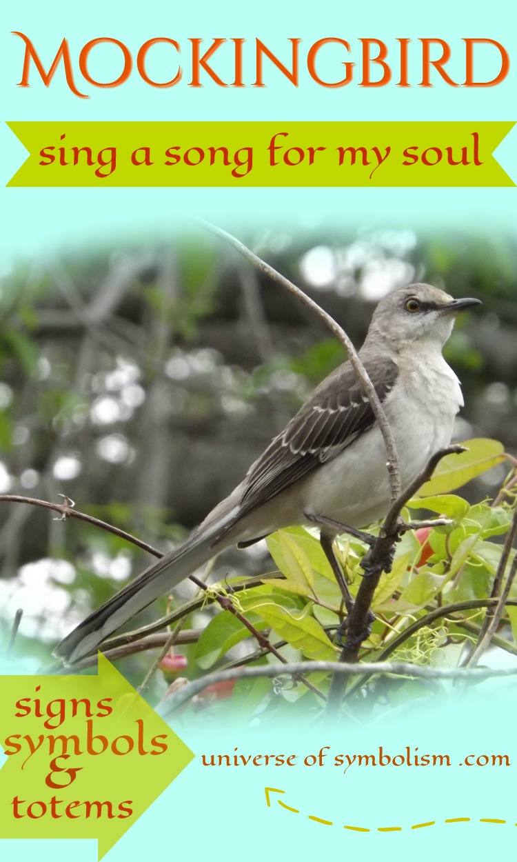 Mockingbird Spirit Animal Symbolizes Singing The Song Of Our Soul