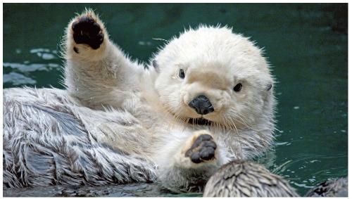 otter symbol and spirit animal