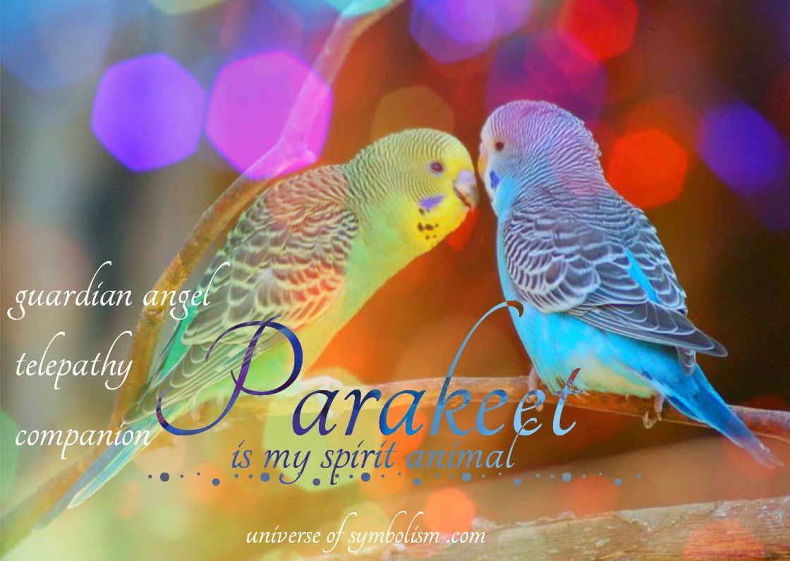 Parakeet spirit, totem, power animal symbolism, and meaning.  Dream symbolism of parakeet, Spiritual Meaning of Parakeet