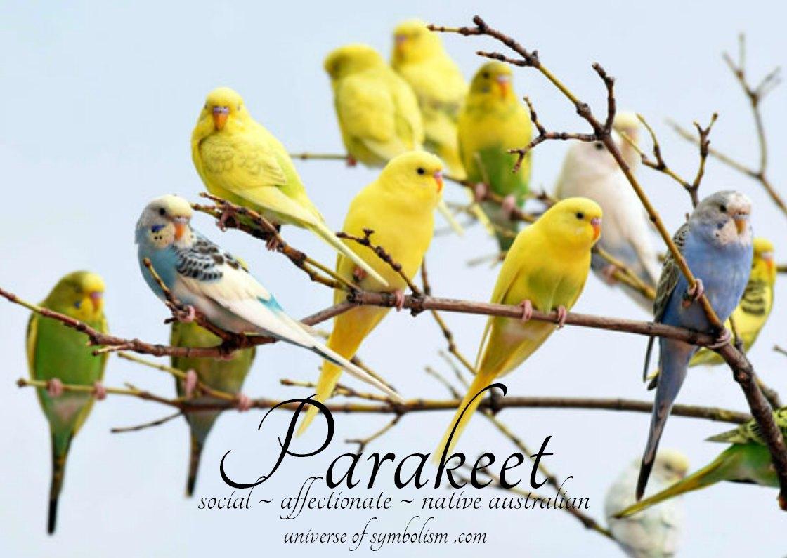 Parakeet Symbolism & Meaning | Parakeet Spirit, Totem, Power Animal | Dream symbolism of Parakeet, Spiritual Meaning of Parakeet