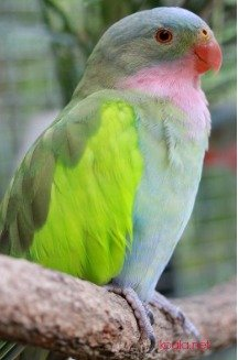 Parrot Symbolism | Parrot Symbolic Meanings