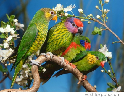 Parrot - an ancient symbol of Spring & A treasure of the jungle