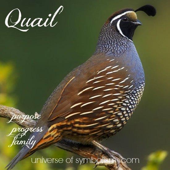 Quail Symbolism & Meaning | Quail Spirit, Totem & Power Animal Attributes | Spiritual & Dream Meaning of Quail