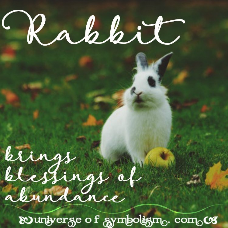 Rabbit Symbolism & Meaning | Rabbit Spirit, Totem & Power Animal Medicine | Rabbit is a Symbol of Innocence, Abundance and the Need for Self Protection